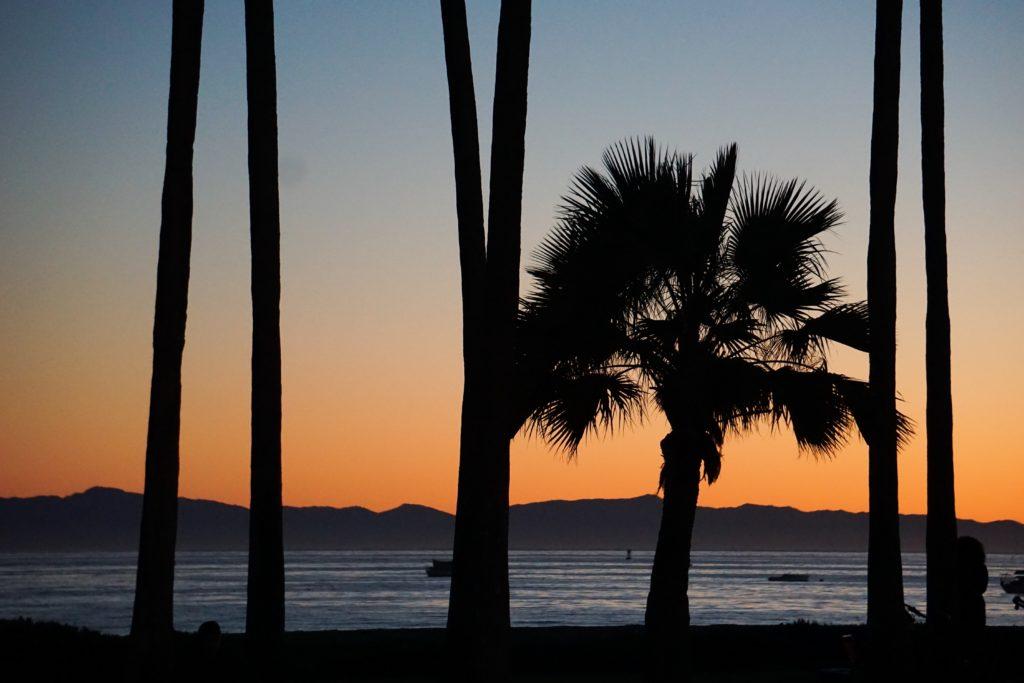 Palm Trees Cabrillo Boulevard Santa Barbara at Sunrise