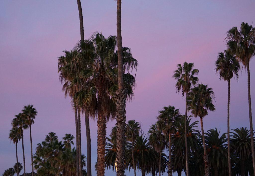 Palm Trees Cabrillo Boulevard Santa Barbara Blue Hour