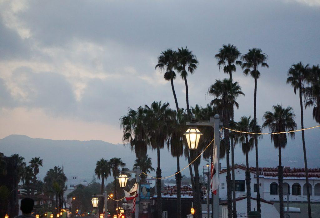 Palm Trees Cabrillo Boulevard Santa Barbara