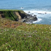 Top Five Things To Do On a Day Trip To Cambria