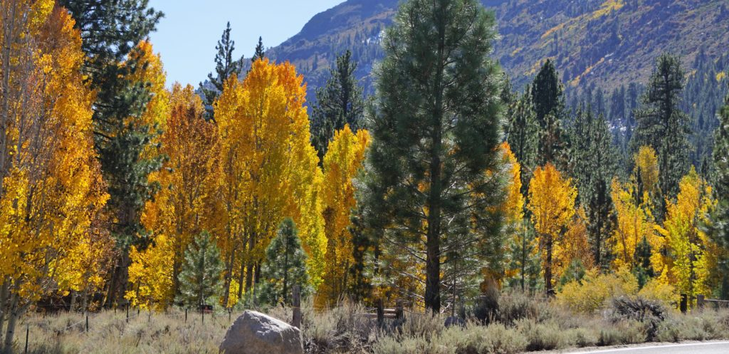 Fall Colors Eastern Sierra