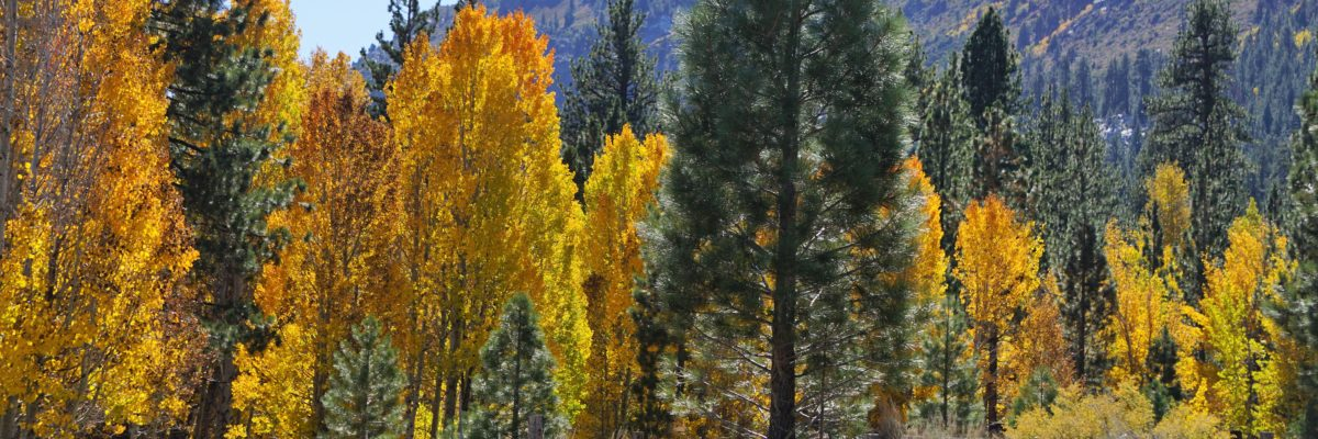 Fall Colors Eastern Sierra
