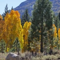 Fall Colors in the Eastern Sierra: Why You Must Do This California Road Trip!