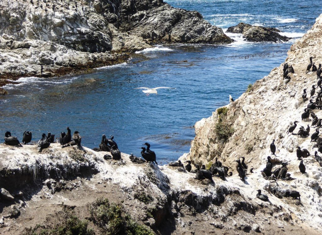 Bird Island Point Lobos State Park Carmel