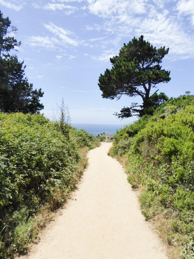 Bird Island Trail Point Lobos State Park Carmel