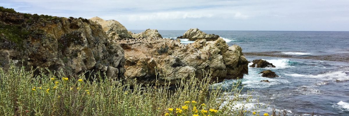 Point Lobos State Park Carmel