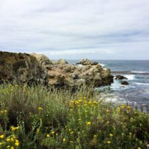 Point Lobos State Park: A California Coastal Gem