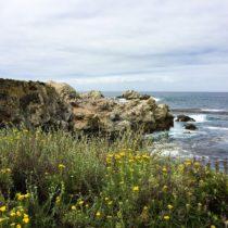 Point Lobos State Reserve: A California Coastal Gem