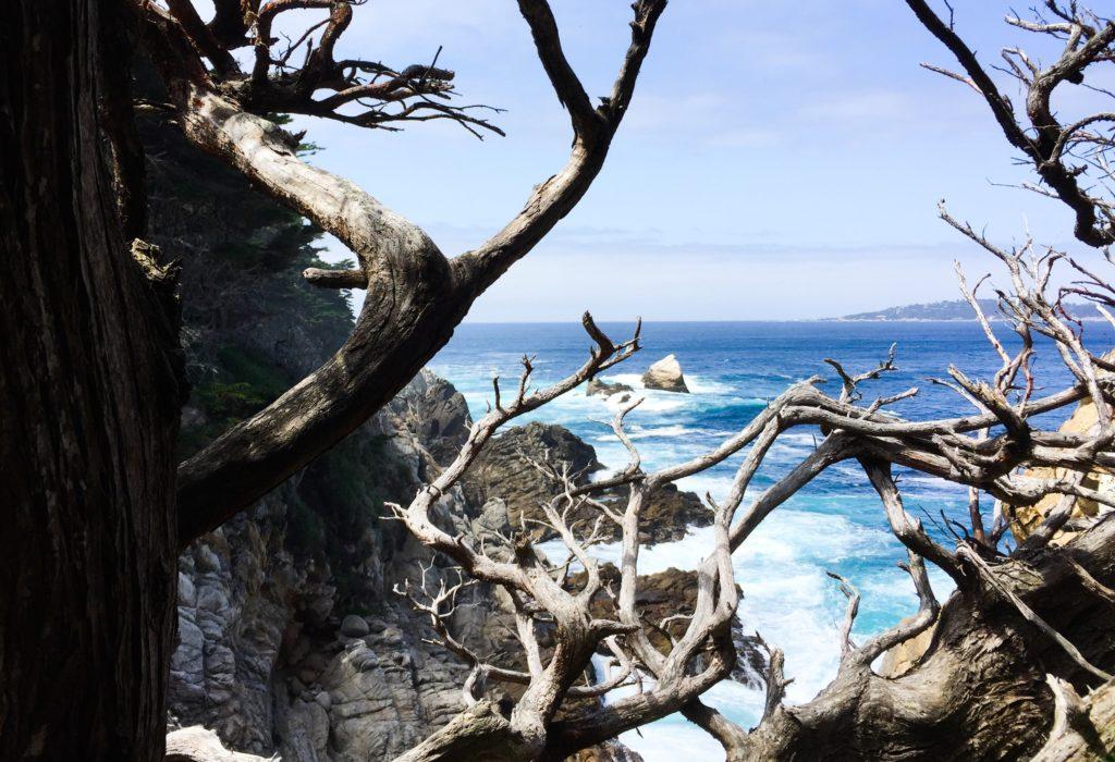 Cypress Grove Trail Point Lobos State Park Carmel