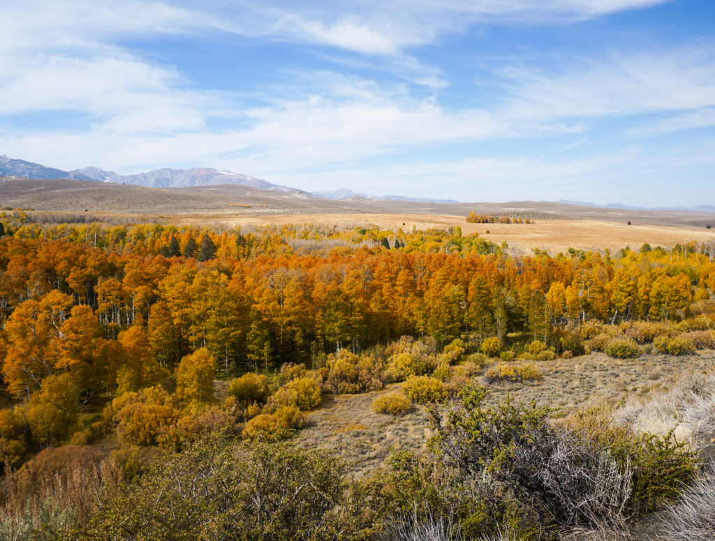 Fall Colors at Conway Summit in the Eastern Sierra