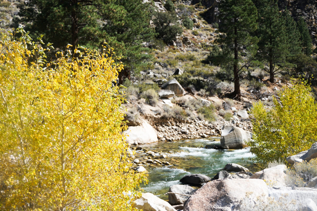 Fall Colors at Walker River, Eastern Sierra