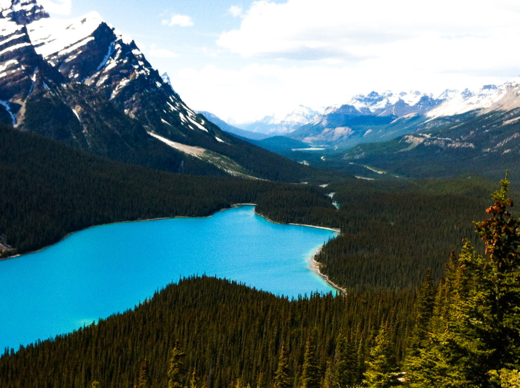 Peyto Lake in the Canadian Rockies