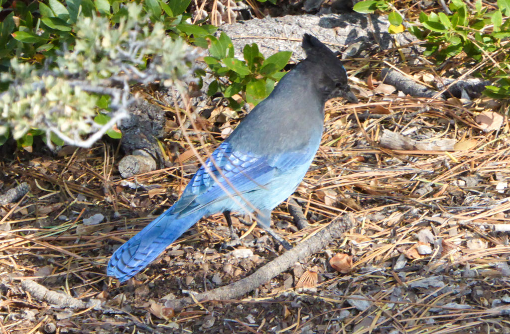 Bird Searching for Food, Sand Harbor State Park, Lake Tahoe