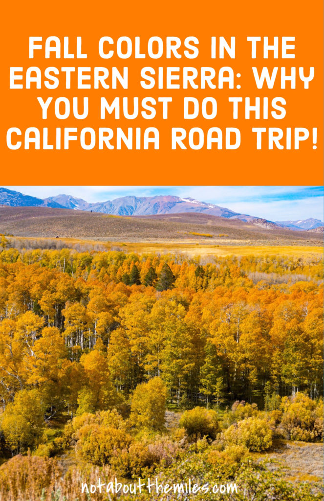 Read my post to discover where to find fall colors in the Eastern Sierra, and why you must do this spectacular California road trip in the fall!