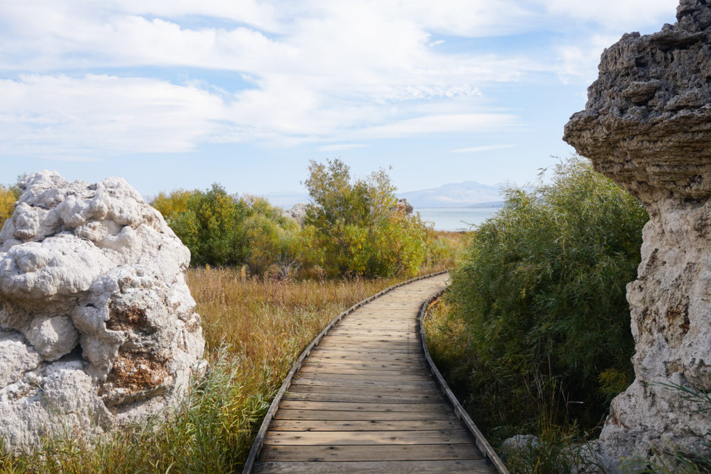 Tufa towers on either side of the boardwalk trail at Mono Lake
