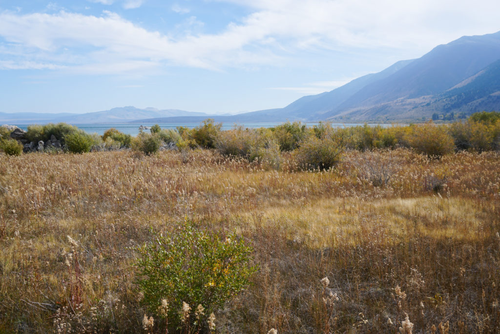 View from the boardwalk trail at Mono Lake in the Eastern Sierra