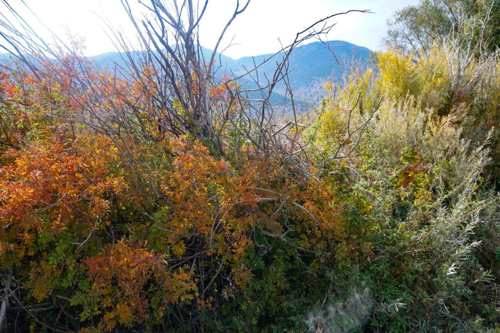 Fall foliage at Mono Lake