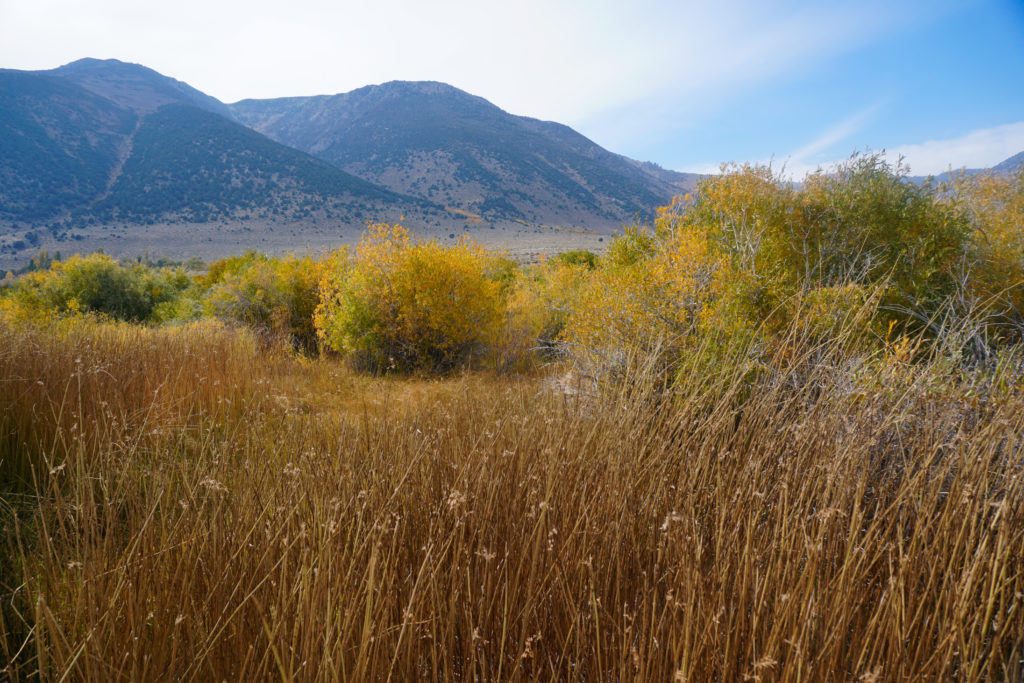 Fall color at Mono Lake in the Eastern Sierra