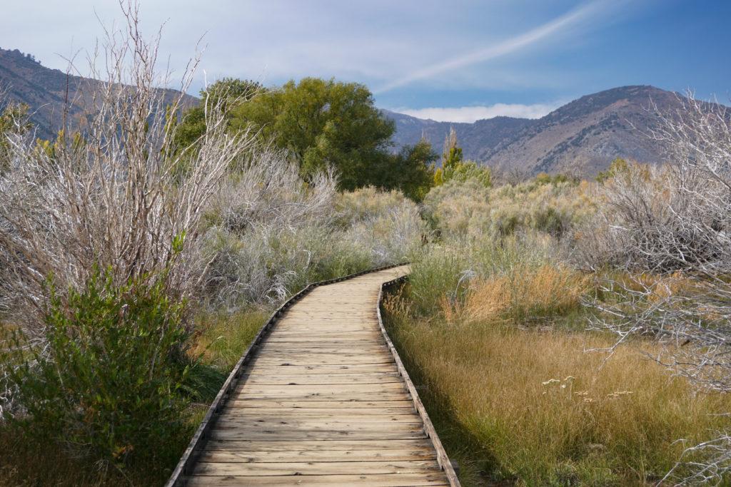 Walking the boardwalk trail at Mono Lake