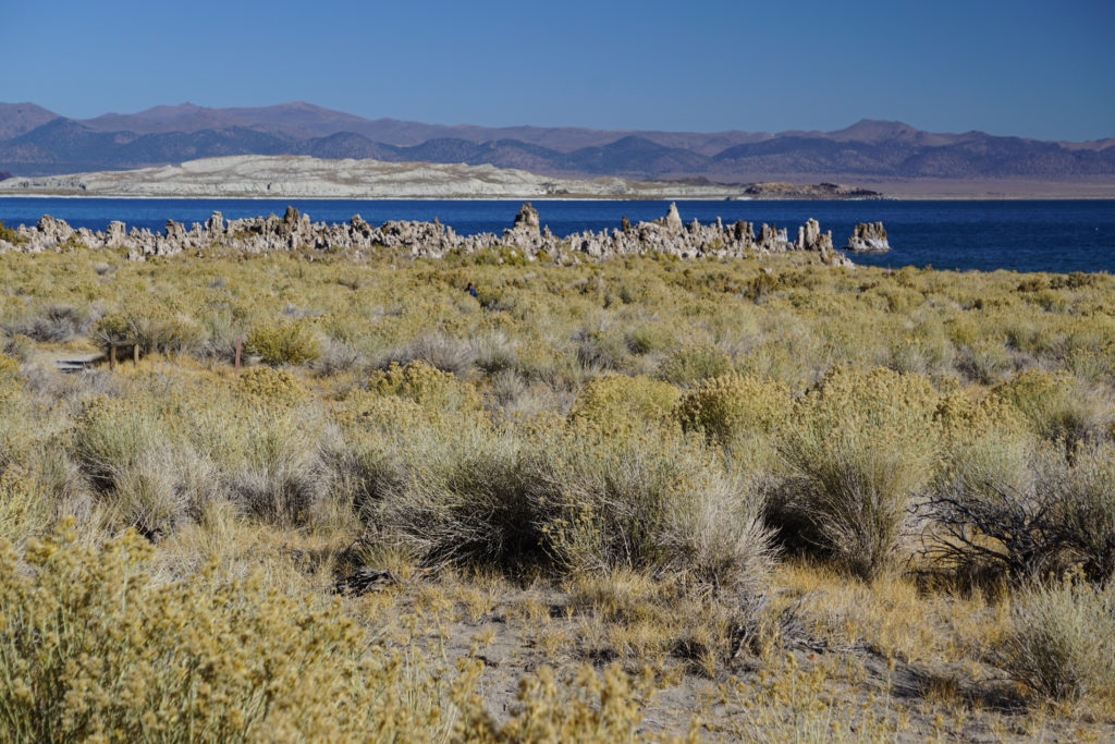 View of the tufa towers at the South Tufa Area at Mono Lake