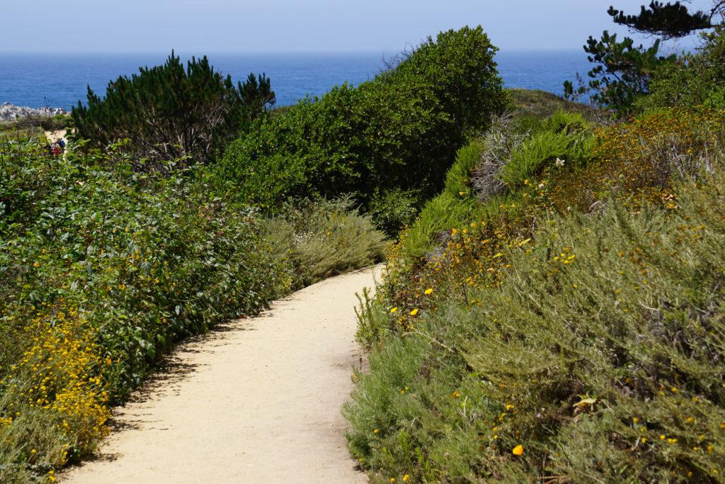 Bird Island Trail Point Lobos State Reserve