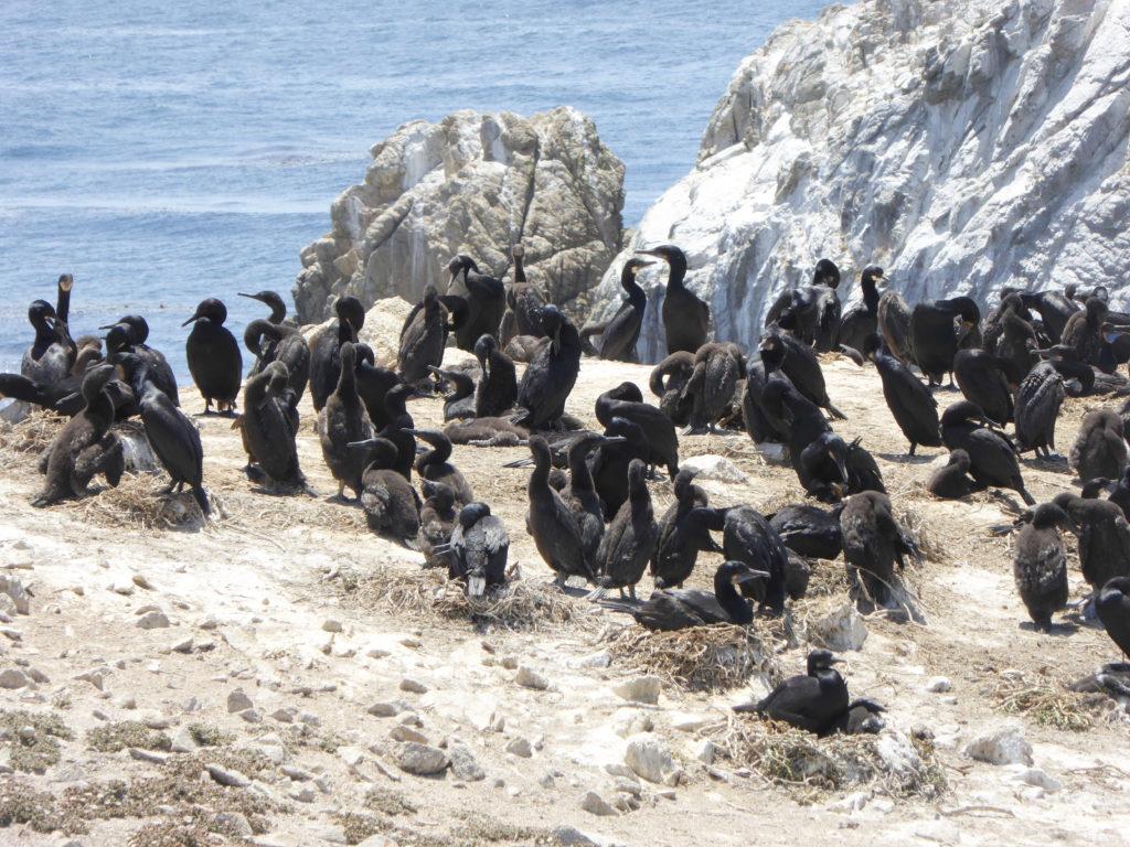 Bird Island Point Lobos State Reserve