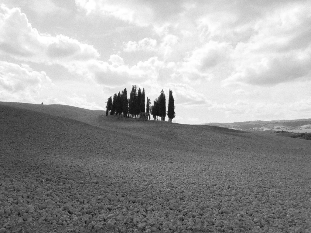 Cypresses of San Quirico d'Orcia Tuscany Italy