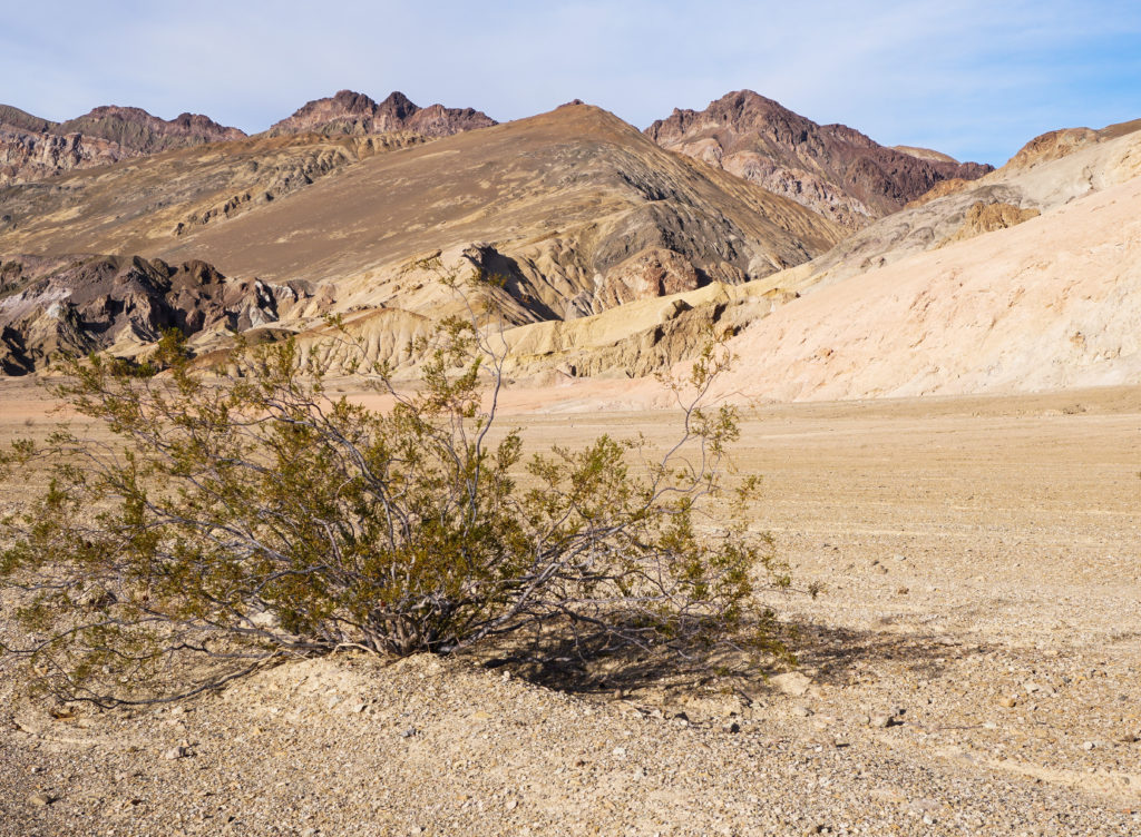 Lone piece of vegetation in the desert landscape at Artist's Drive in Death Valley National Park