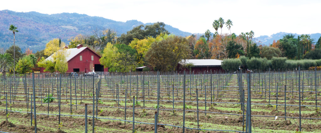 Wine country views in Napa Valley California
