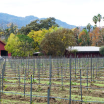 Five Fun Things to do in the Napa Valley (Other than Wine Tastings!)