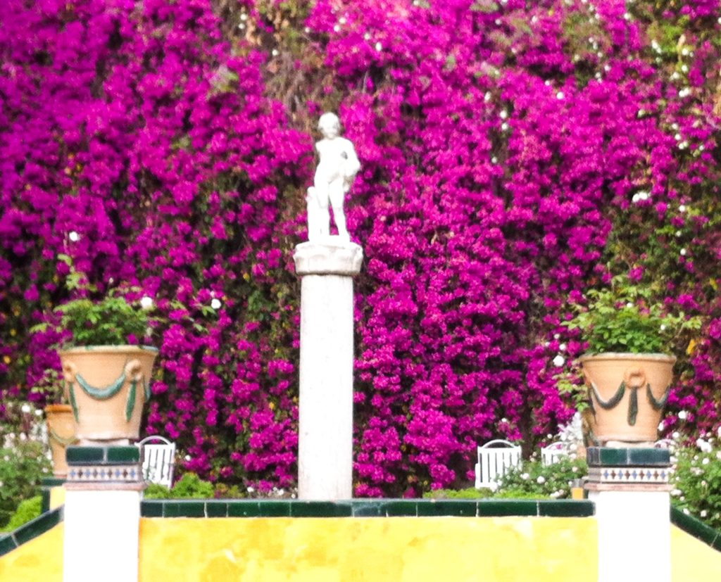 Bougainvillea in bloom Casa de Pilatos Seville Spain