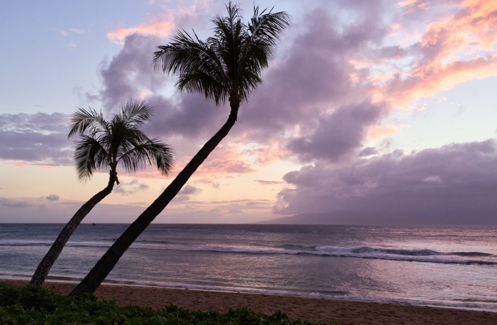 The crooked palms at Kaanapali Beach in Maui Hawaii
