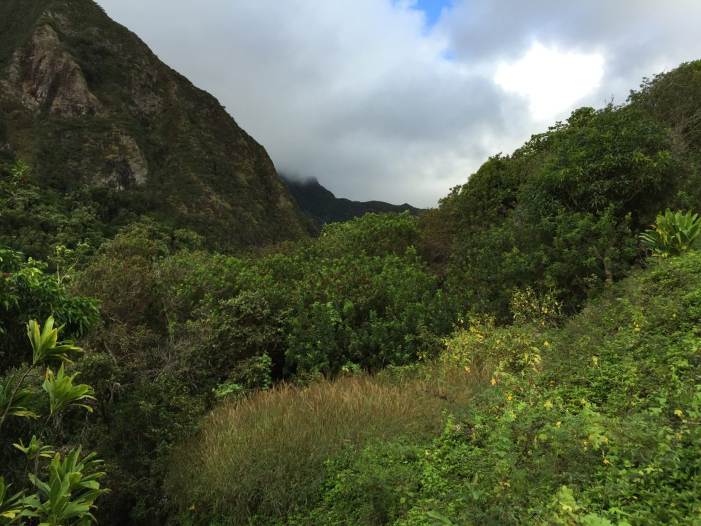 The beautiful Iao Valley in Maui Hawaii
