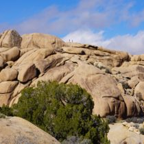 10 Fun Things to Do in Joshua Tree National Park (In One Day)!