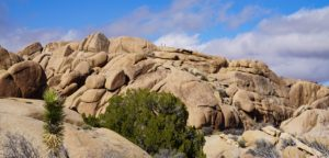 10 Fun Things to Do in Joshua Tree National Park