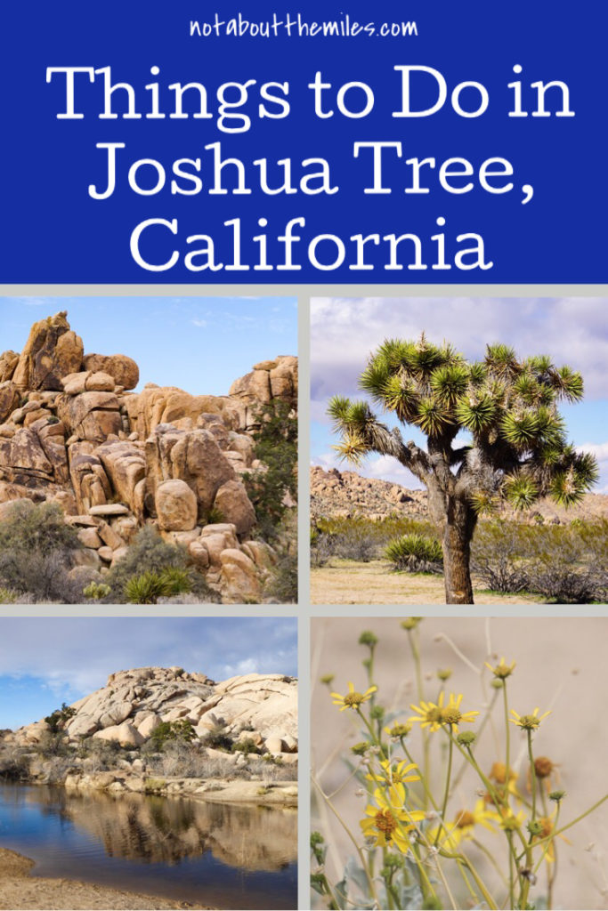 Planning a visit to Joshua Tree National Park? Discover the best things to do in this Southern California Park, from hiking to bouldering and birding to photography.
