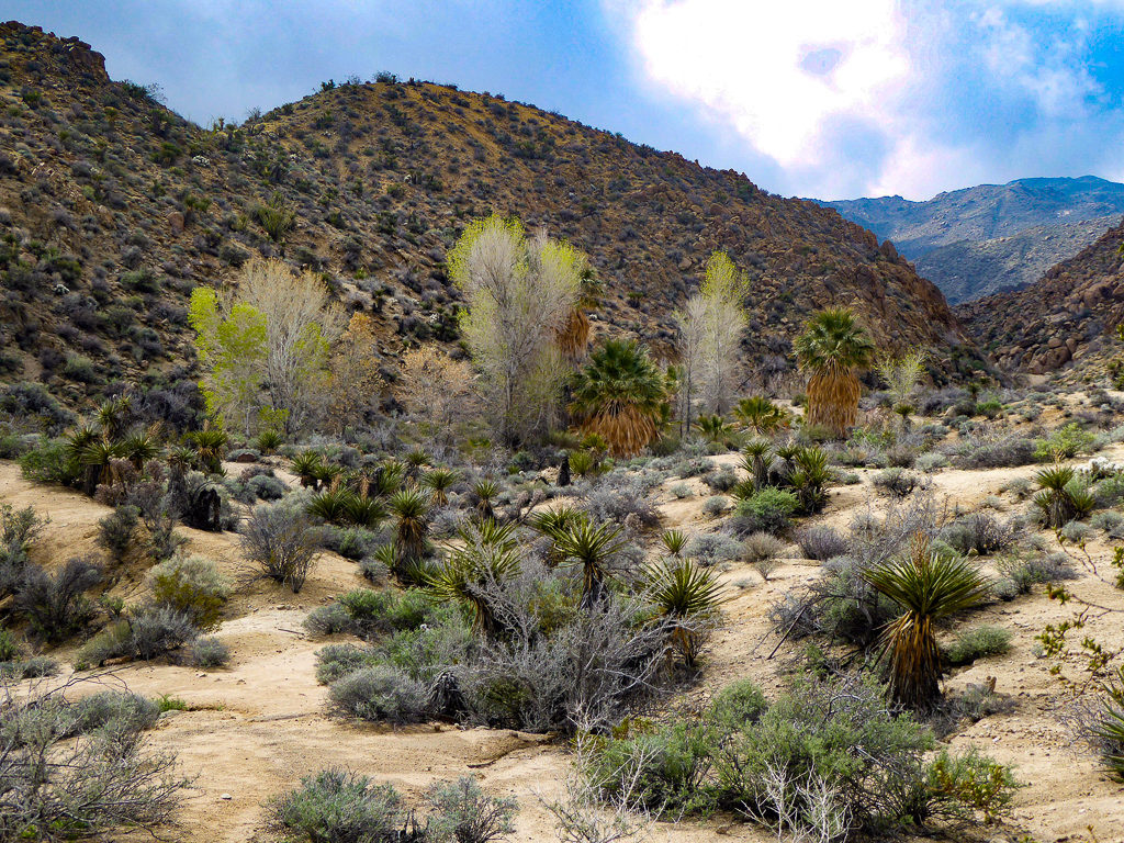 Joshua Tree National Park in southern California, USA