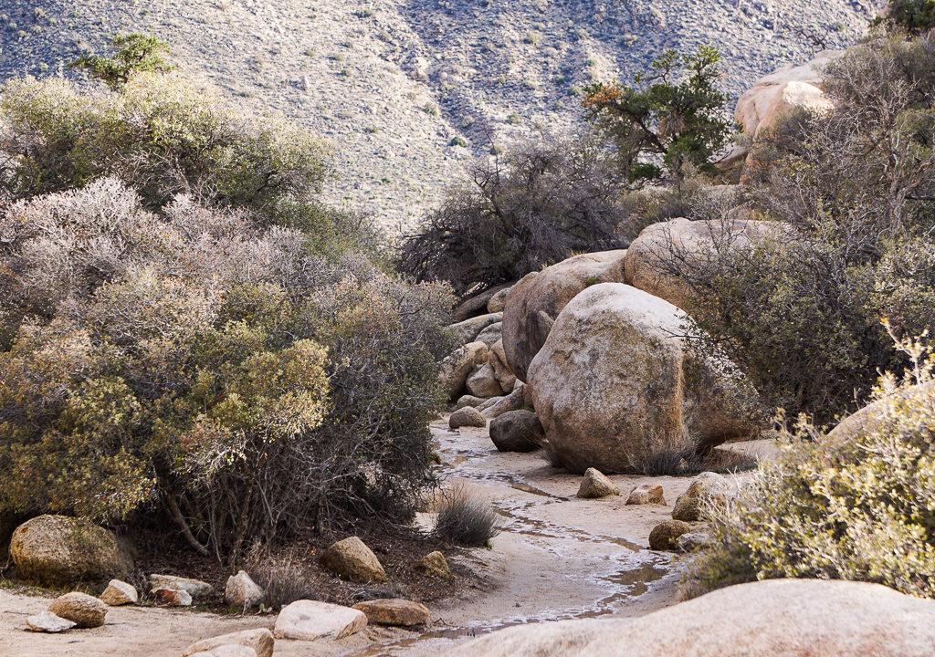Barker Dam Nature Trail in Joshua Tree National Park, California, USA