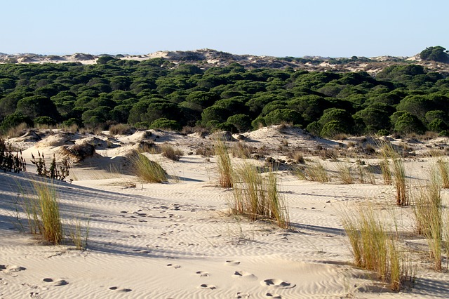 Donana National Park in Andalusia Spain