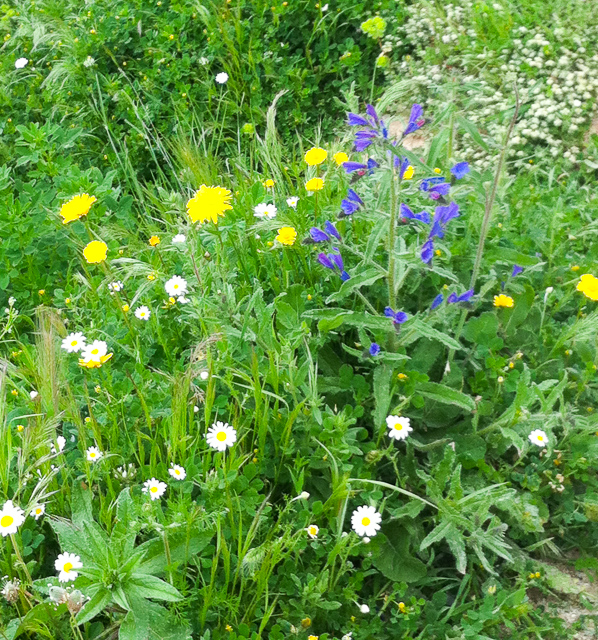 Wildflowers in Ronda Spain in the spring