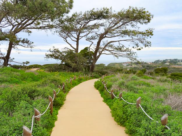 Coastal Sage Scrub Cabrillo National Monument San Diego California