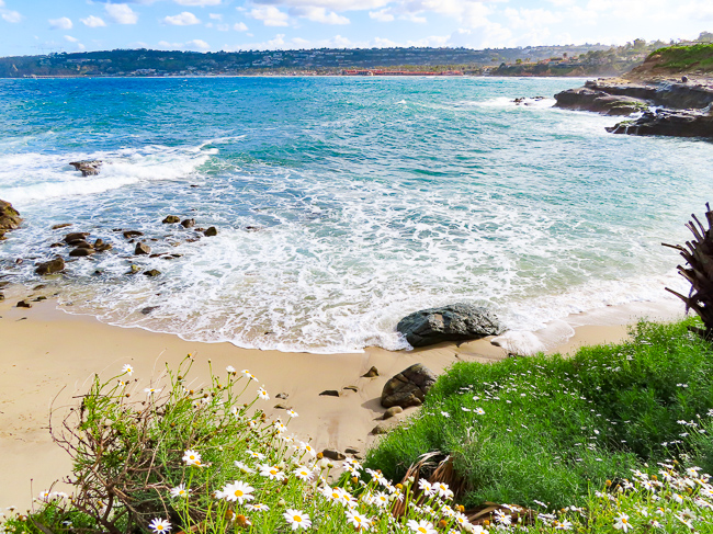 Wildflowers at la Jolla Cove, California