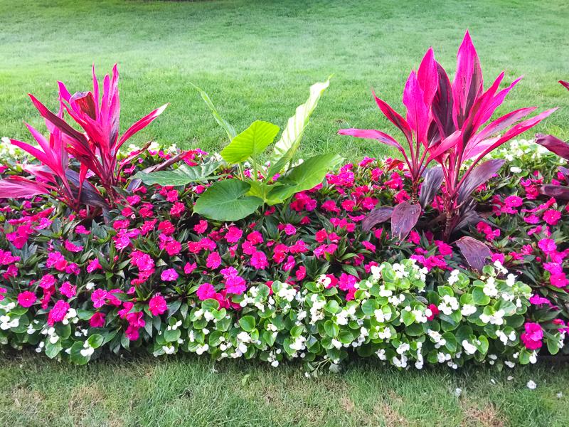 A flower bed in the Public Garden in Boston