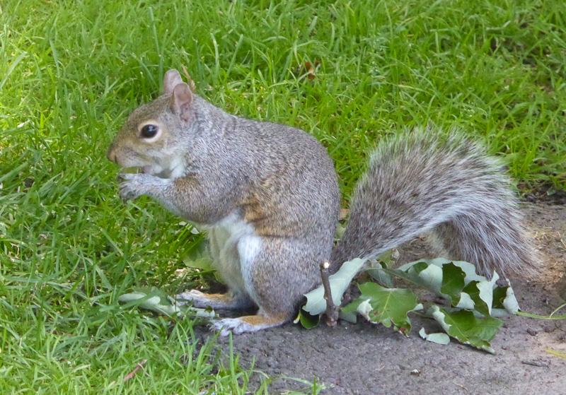 Squirrel Boston Public Garden