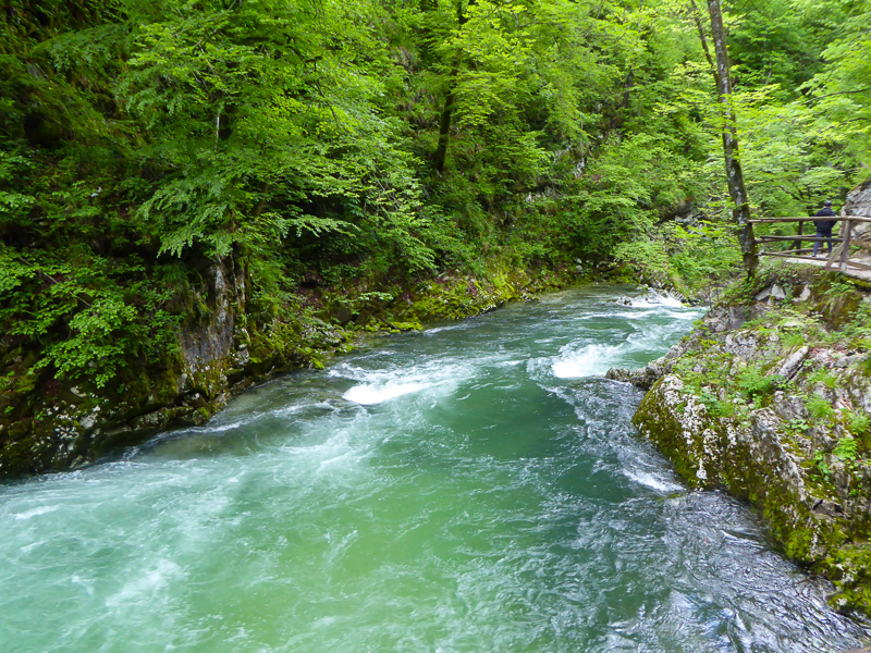 The Radovna River in Vintgar Gorge, Slovenia