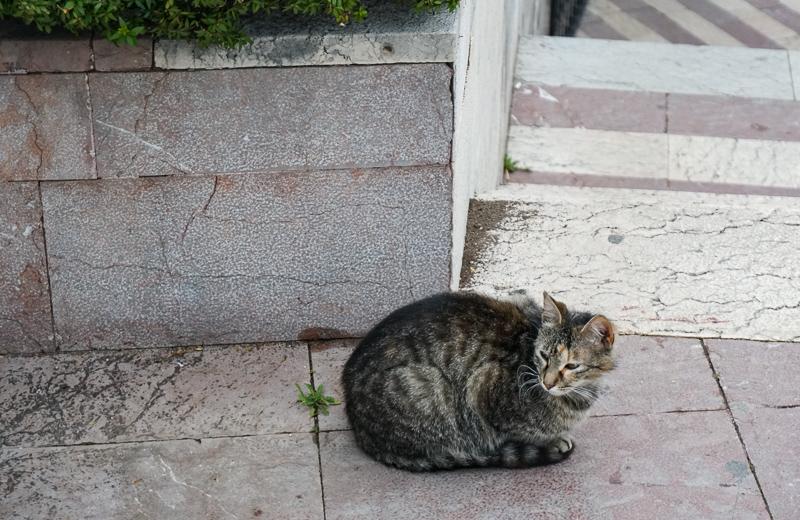 Cat in Kotor Montenegro
