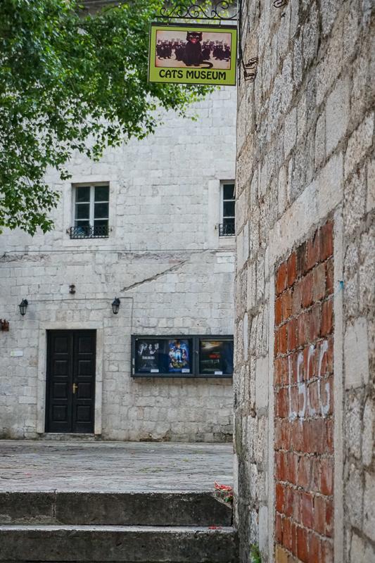 Cats Museum Kotor Montenegro