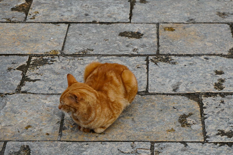 Ginger cat in Kotor, Montenegro