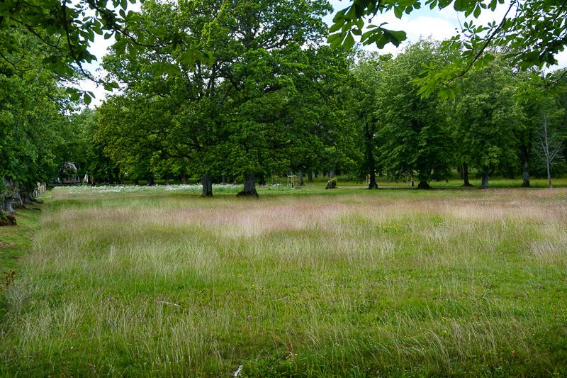 Meadow Drottningholm Palace Sweden