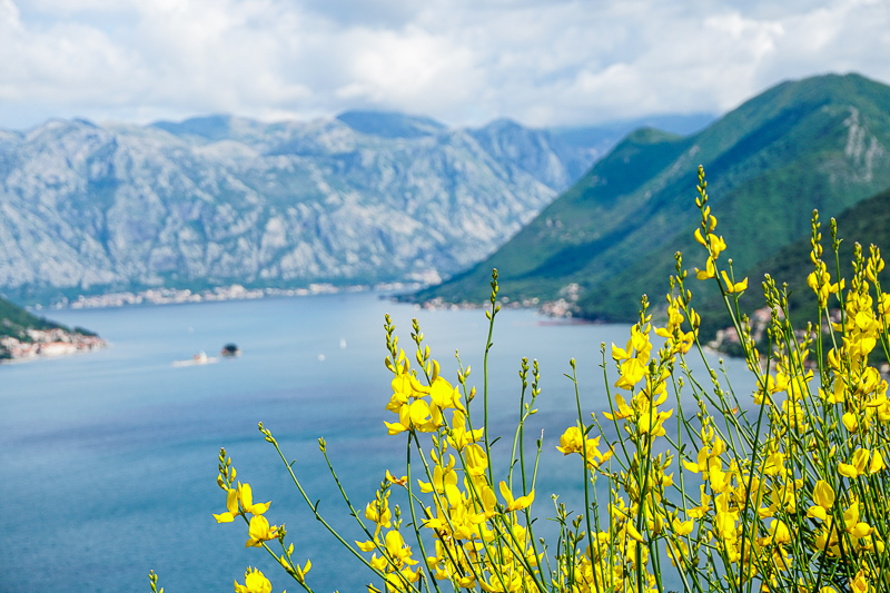 Wildflowers along the Bay of Kotor in Montenegro